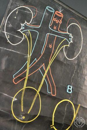 Planche affiche anatomique